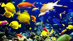 Aquatic HD Wallpapers | Most beautiful places in the world ...