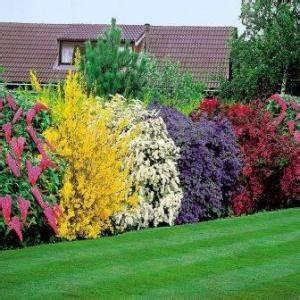 Pflanzen Pflegeleicht Garten : hecken und fertig hecken als sichtschutz ~ Lizthompson.info Haus und Dekorationen