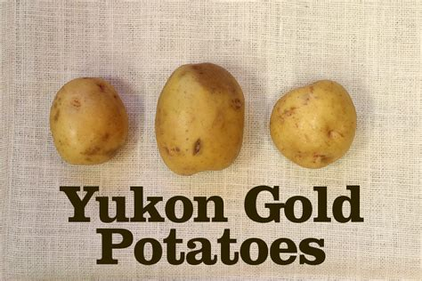 boiling yukon gold potatoes how your guide to choosing the right potatoes onions lepp