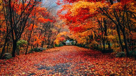 First Day Of Fall 2019 australias  autumn country town time  vote 960 x 540 · jpeg