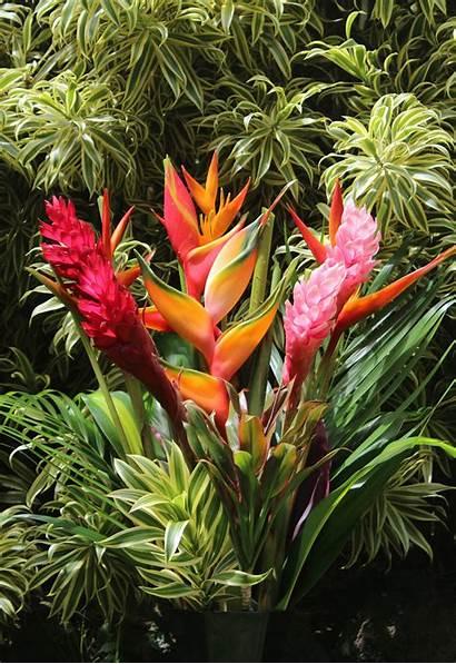Exotic Bouquet Tropical Flowers Bouquets Hawaii Vase