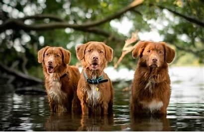 Breeds Medium Dog Dogs