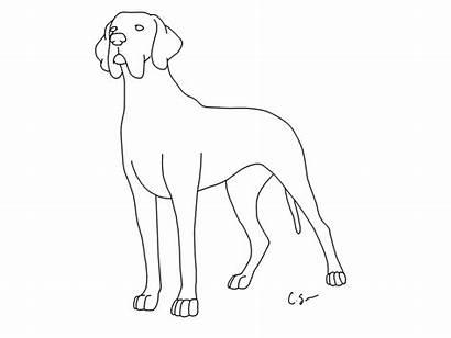 Coloring Dane Pages Dog Printable Lps Piebald