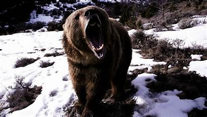 Bear Wallpapers Amazing Angry Greatest Seen Ever