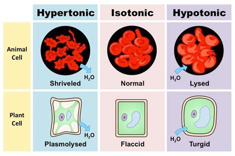 osmolarity bioninja
