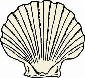 scallop shell - outline, no color | Tattoo Ideas ...