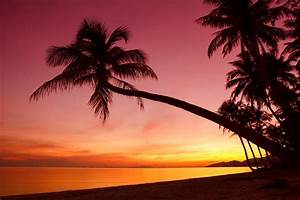 tropical sunset weeping palm trees silhouette shore ocean ...