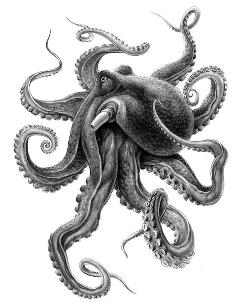 Image result for realistic octopus drawing   Octopus tattoos, Octopus tattoo sleeve, Octopus drawing