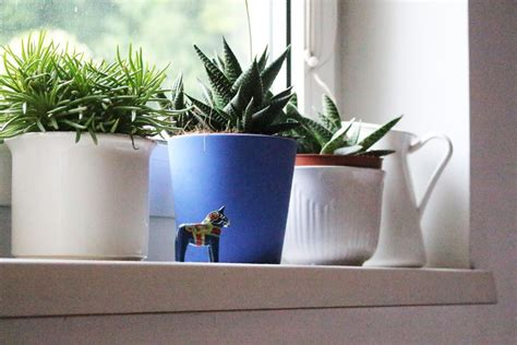 Window Ledge Plant Pots by Pin By The Sill On Windowsill Plants Garden Potted