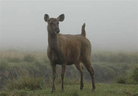horton plains national park central highlands sri lanka