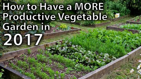 Ways To Make Your Vegetable Garden More Productive In