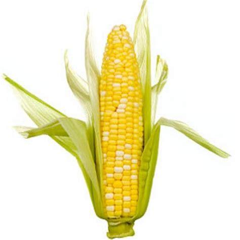 glossaire de cuisine supertoinette épis de maïs