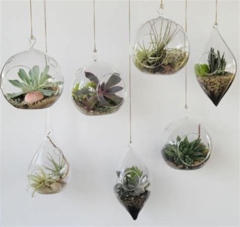 25 best ideas about hanging succulents on