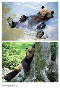 Happy Grizzly Bear