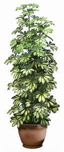 Pot De Fleur Transparent : potted plant png ~ Teatrodelosmanantiales.com Idées de Décoration