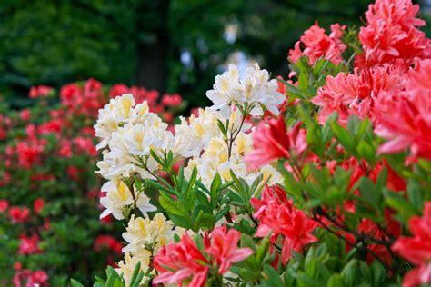 comment choisir ses fleurs d ombre ooreka