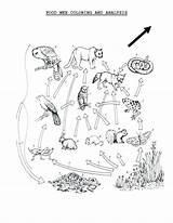 Coloring Cuttlefish Chain Web Getcolorings Getdrawings Marvelous Printable Colorings sketch template