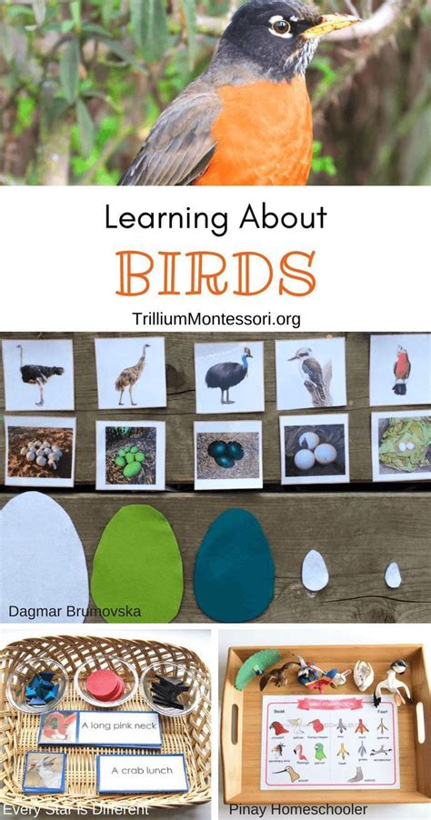 montessori resources for learning about birds early childhood what could work