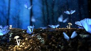 Butterfly 3D Blue · Free photo on Pixabay