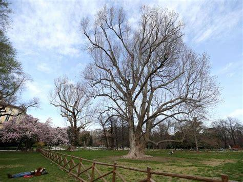 re d accès alberi monumentali corriere it