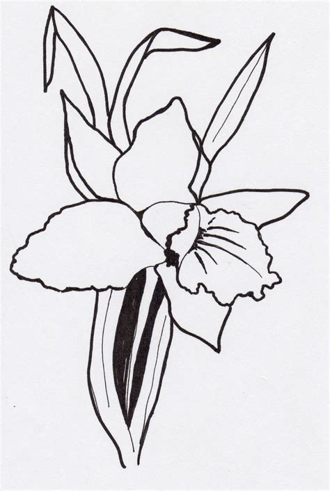 how to draw a cattleya flower the gallery for gt simple orchid outline
