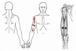 Biceps Images