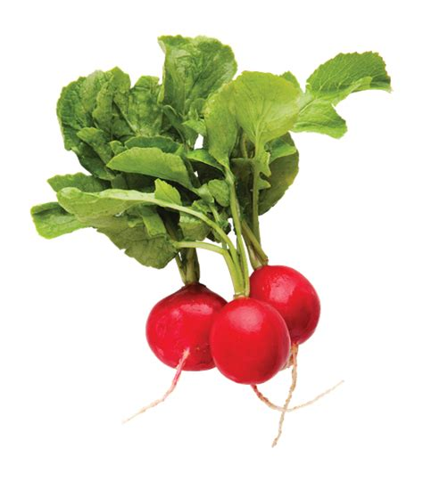 Green Top Red Radish Bunch | Hy-Vee Aisles Online Grocery ...