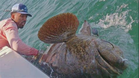 grouper pound wilson pic