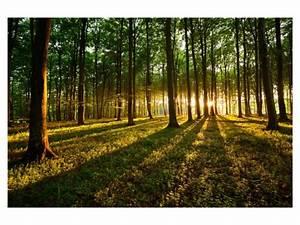 Bilder Vom Wald : waking woods wald bild mit besonderer atmosph re ~ Yasmunasinghe.com Haus und Dekorationen
