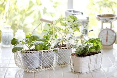 simple secrets   successful indoor herb garden