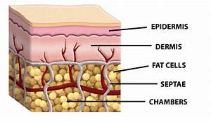 How To Reduce Fat Cells Naturally