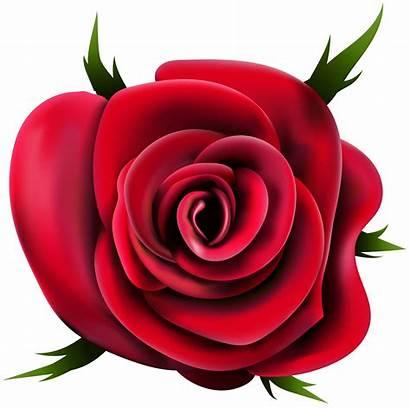 Transparent Rose Clip Roses Clipart Flower Flores
