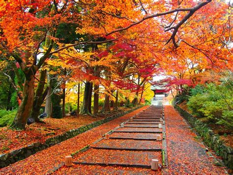 Tanggal Wanita Datang Bulan Aki Musim Gugur Di Jepang Kelompok 3