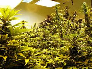 Which Room In The House Is Best For Growing Weed