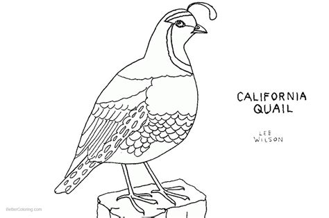 Coloring Quail by Quail Coloring Pages California Quail Line Free