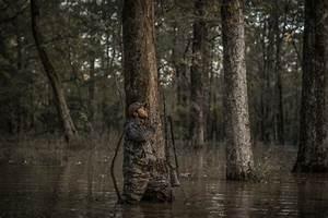 Guide To Green Timber Mallard Hunting