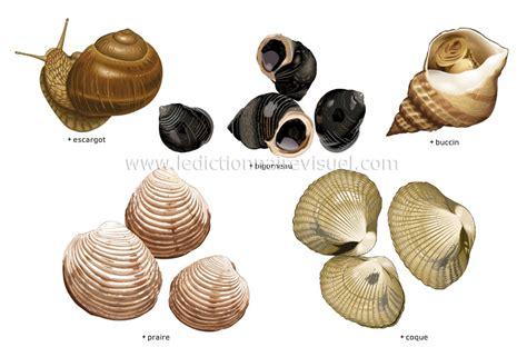 escargot cuisiné alimentation et cuisine gt alimentation gt mollusques image