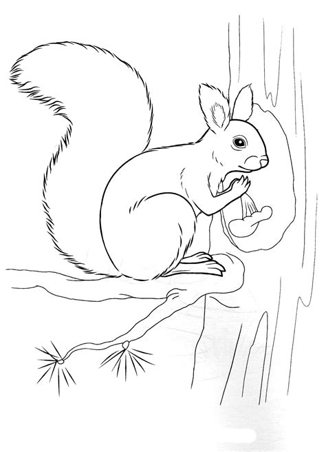 coloring page squirrel holding  nut