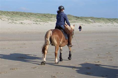 urlaub  holland pferdebilder galerie im reitforum
