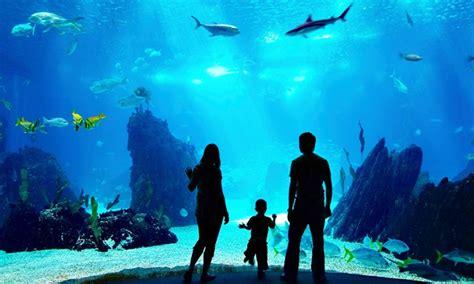aquarium des cevennes 224 jean du gard languedoc roussillon groupon