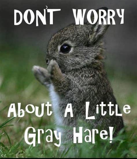 Cute Easter Meme - 63 best bunny memes images on pinterest bunny meme bunny rabbits and funny bunnies