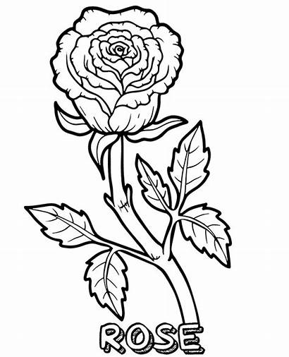 Coloring Rose Pages Flowers Flower Sheets Single