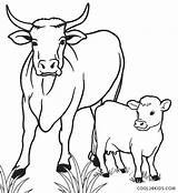 Cow Coloring Calf Pages Drawing Cows Printable Line Cool2bkids Cartoon Funny Animal Simple Colouring Sheets Drawings Easy Farm Animals Getdrawings sketch template