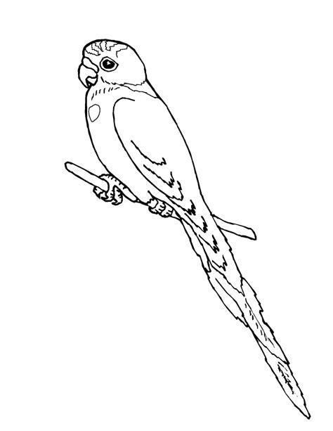 desenho de periquito no galho para colorir tudodesenhos