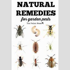 17 Best Ideas About Garden Pests On Pinterest Garden