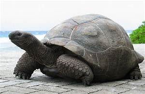 Happy World Turtle Day | MNN - Mother Nature Network