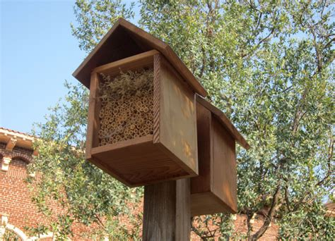 house  native bees  insects root simple