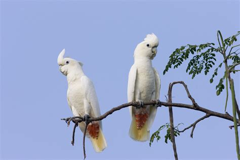 Edge Blog » The Parrot Society Supports Edge Birds In The