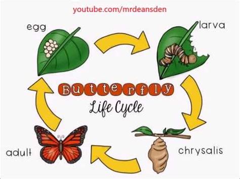 butterfly life cycle for preschool butterfly cycle for kindergarten 723