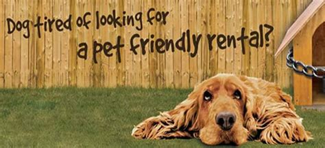 Looking For A Dog Friendly Rental Property?  All Things